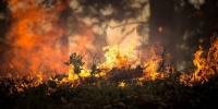 Forest-fire-2268729_640_thumb_main - Sibnovosti.ru